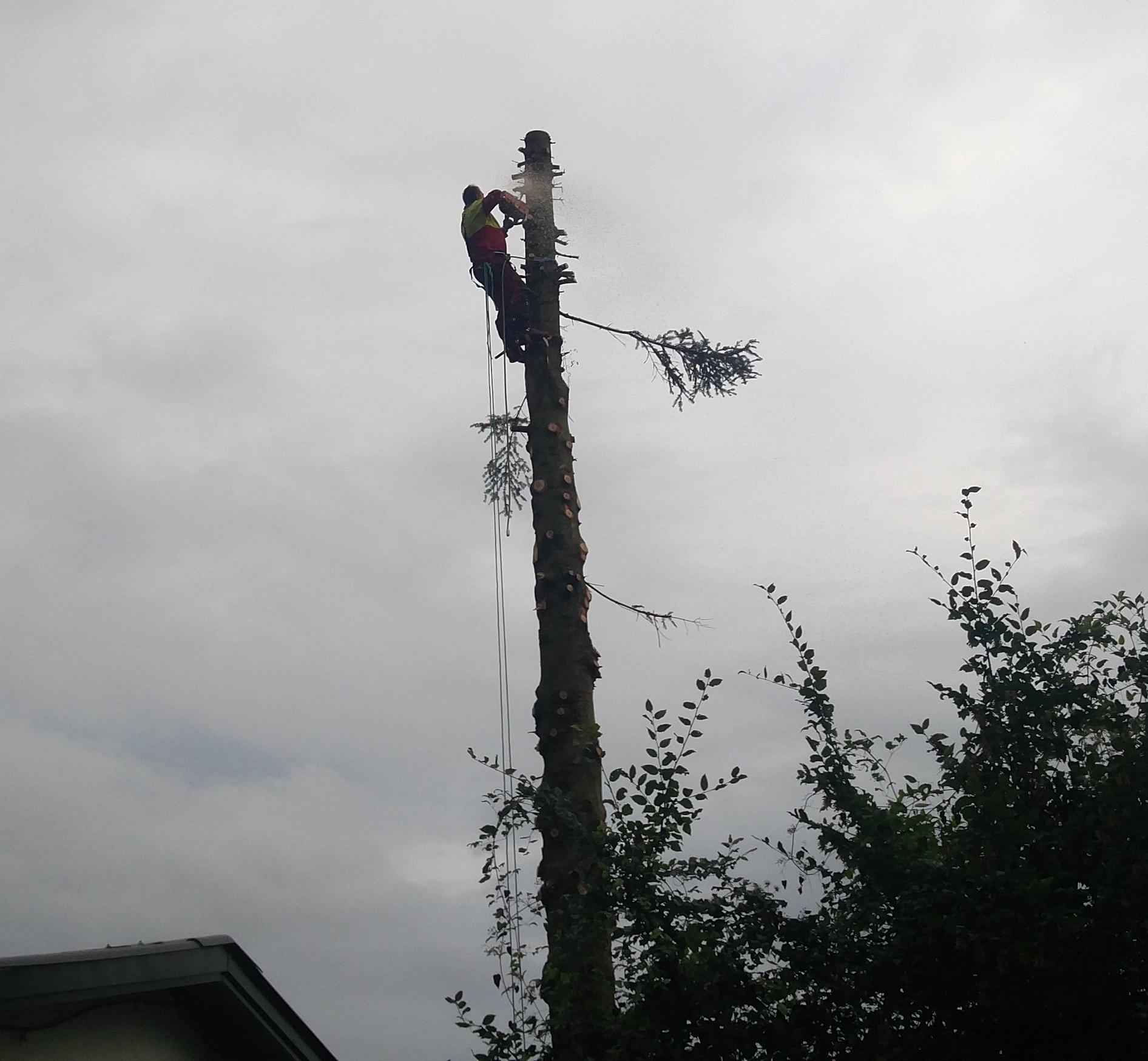 Bevorzugt Problembaumfällung Baum fällen | Wurzelstock fräsen Gartenarbeit TY18